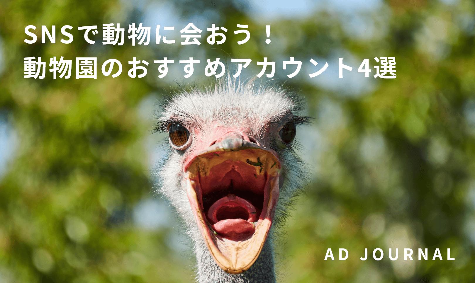 SNSで動物に会おう!動物園のおすすめアカウント4選